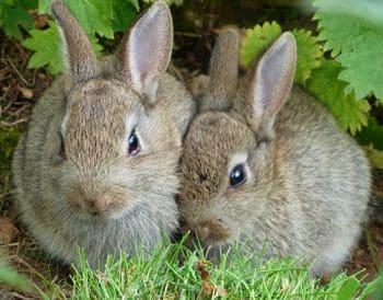 cuidados de un conejo tener un conejo en casa