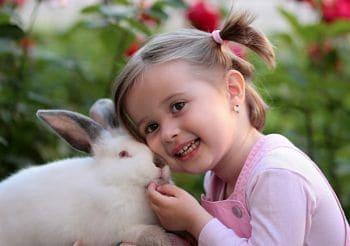 como se comportan los conejos