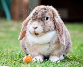 comportamiento conejos