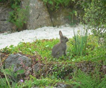 caracteristicas de los conejos