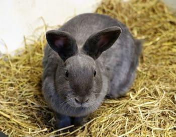 conejos domesticos cuidados