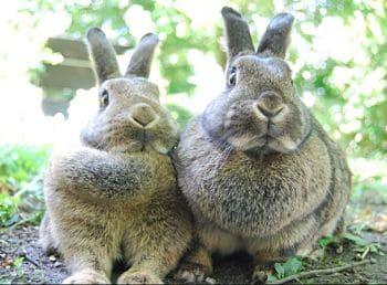 conejos informacion