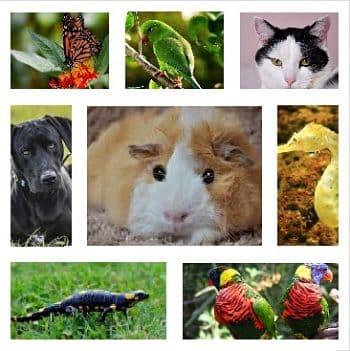 mascotas raras y distintas