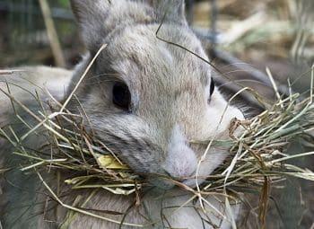 que comen los conejitos
