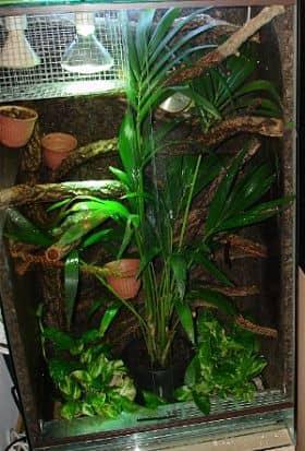 terrario camaleon