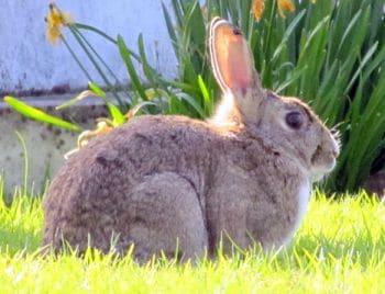 los conejos animales muy lindos